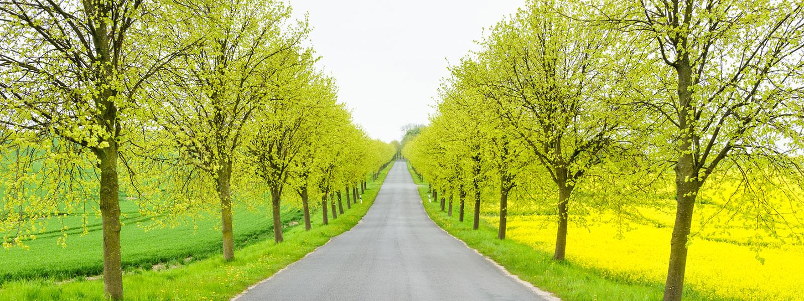 TerraCottem Arbor
