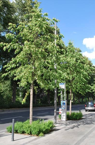Baum- und Strauchpflanzung